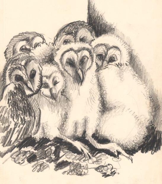 Baby Owls, Opuwo, Kaokoland, 26 May 1985, SADF, Military