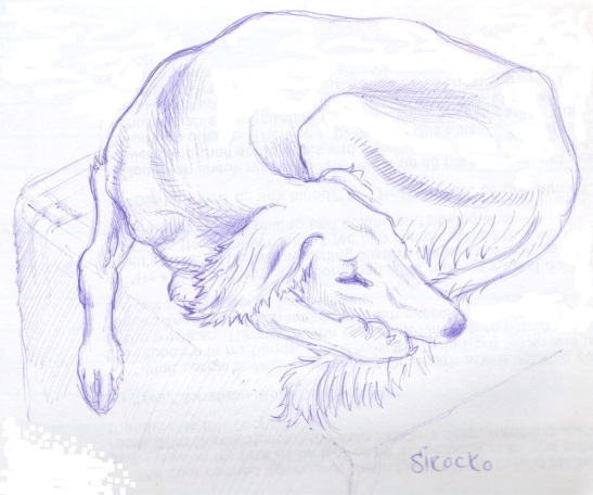 Saluki, Drawing, Motif, Sirocco, Graham Leslie McCallum